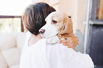 Un perro mejora y fortalece el sistema inmunitario